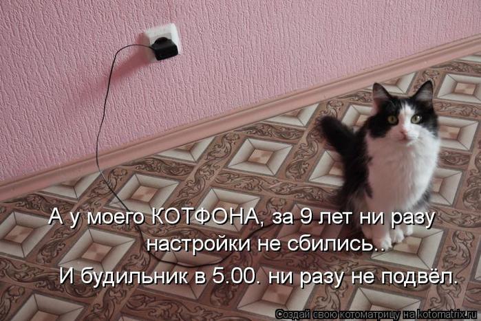 kotomatritsa_gz (700x467, 72Kb)