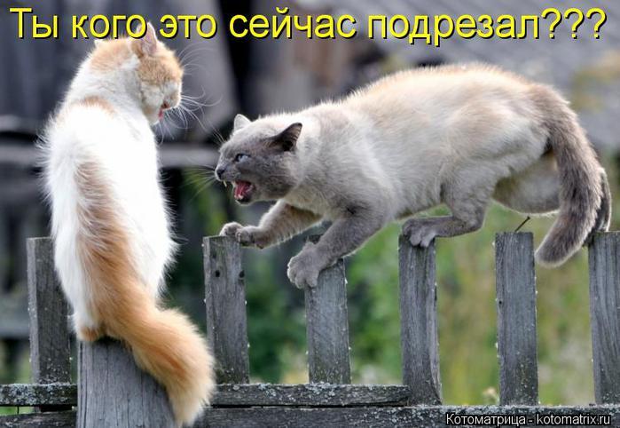 kotomatritsa_N8 (700x482, 56Kb)