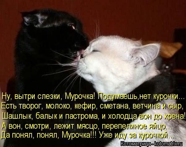 kotomatritsa_OE (600x474, 53Kb)