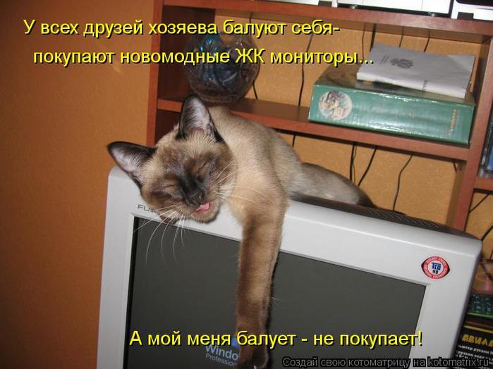 kotomatritsa_PC (700x524, 54Kb)