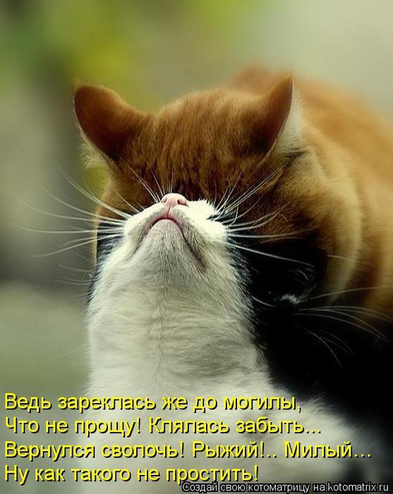 kotomatritsa_zl (557x700, 59Kb)