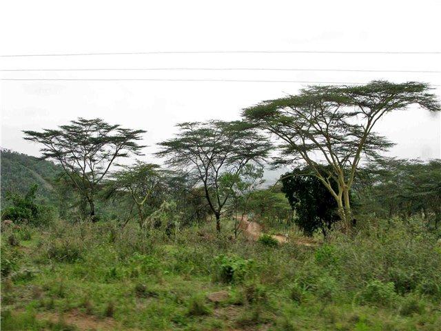 кения3 (640x480, 76Kb)