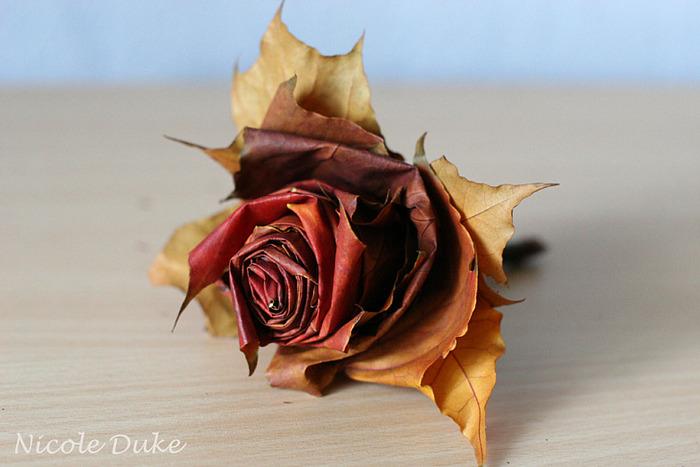 rose (31) (700x467, 98Kb)