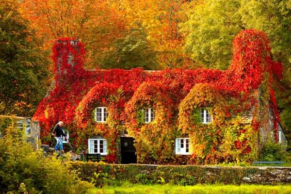 Дома, где живет осень1 (600x400, 119Kb)