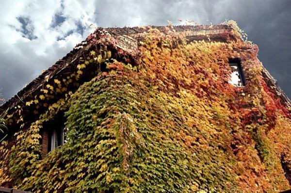 Дома, где живет осень3 (600x398, 107Kb)