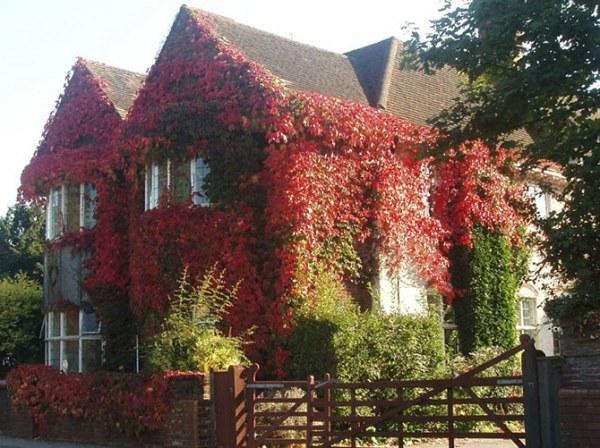 Дома, где живет осень7 (600x448, 94Kb)