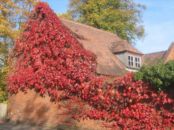 Дома, где живет осень13 (600x450, 112Kb)