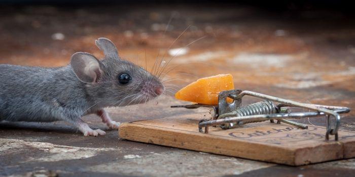 mouse_01 (700x350, 55Kb)