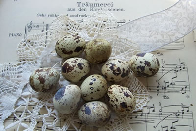 free_background_backgrounds_Quail_eggs_with_Music_Sheet (400x267, 33Kb)