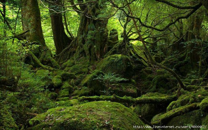 красивые пейзажи/4800467_1349439398_yakusima_7 (700x437, 247Kb)
