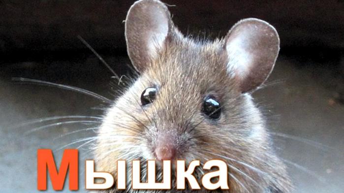 мышка (700x393, 103Kb)
