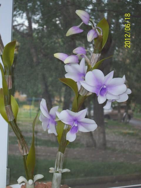 Орхидея.jpeg 2 (480x640, 73Kb)