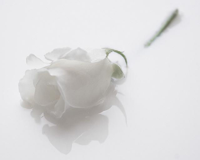 flower-6 (73Kb)