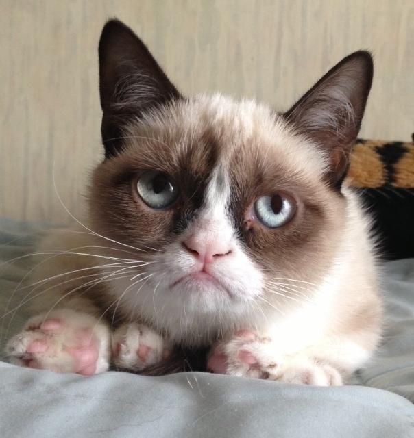 2835299_Grumpy_Cat1 (604x640, 145Kb)