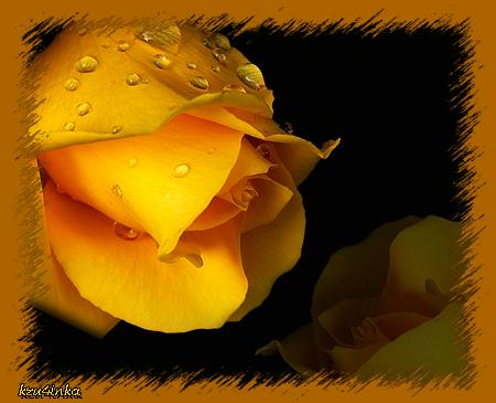 Роза-на-черном (450x365, 168Kb)