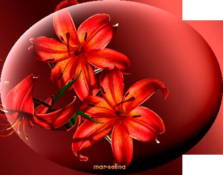 Лилии (450x353, 225Kb)