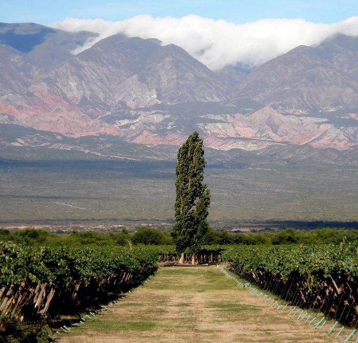 argentinskij-vinogradnik (700x670, 132Kb)