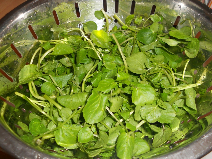 Кресс-салат рецепты фото
