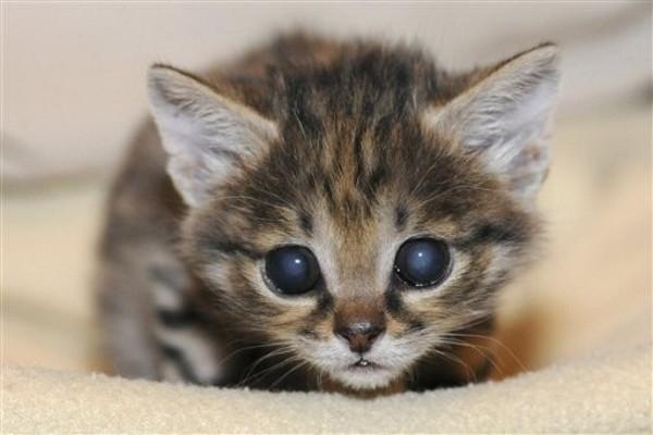 1349695930_cat (600x400, 104Kb)