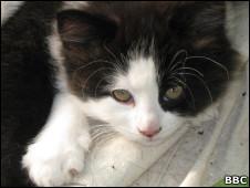 101106012704_kitten_226x170_bbc (226x170, 13Kb)