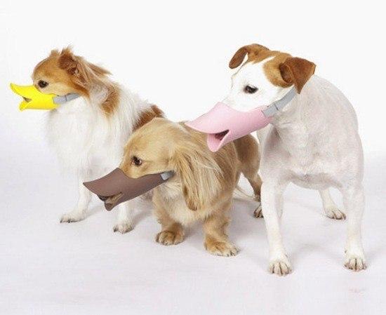 смешной намордник для маленьких собак (500x346, 24Kb)/4171694_smeshnoi_namordnik_dlya_malenkih_sobak_1 (550x449, 31Kb)