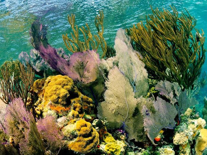 Живописные рифы.