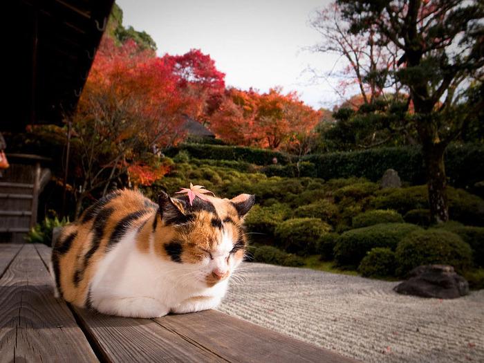 красивые фото осени киото япония (700x525, 147Kb)
