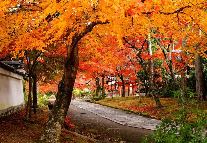 красивые фото осени киото япония 3 (700x483, 279Kb)