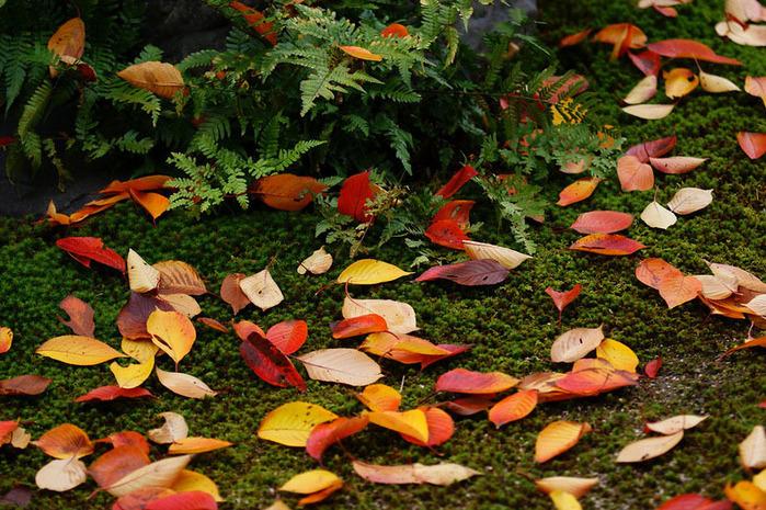 красивые фото осени киото япония 5 (700x465, 210Kb)