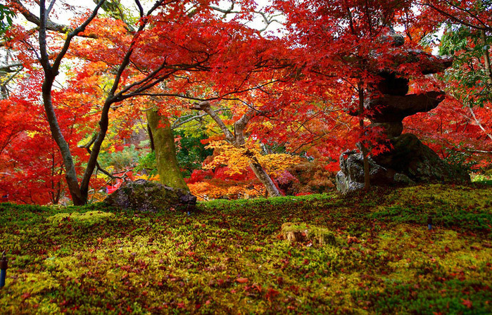 красивые фото осени киото япония 7 (700x448, 278Kb)
