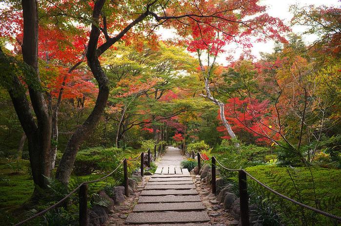 красивые фото осени киото япония 9 (700x464, 255Kb)