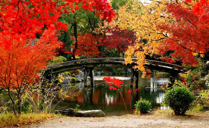 красивые фото осени киото япония 11 (700x429, 244Kb)