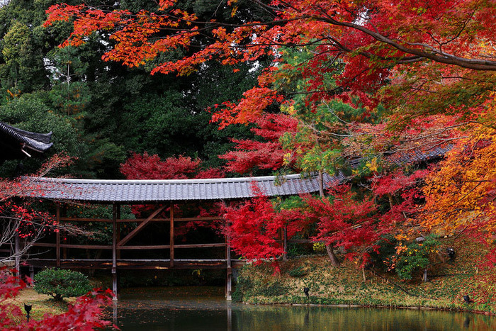 красивые фото осени киото япония 14 (700x467, 261Kb)
