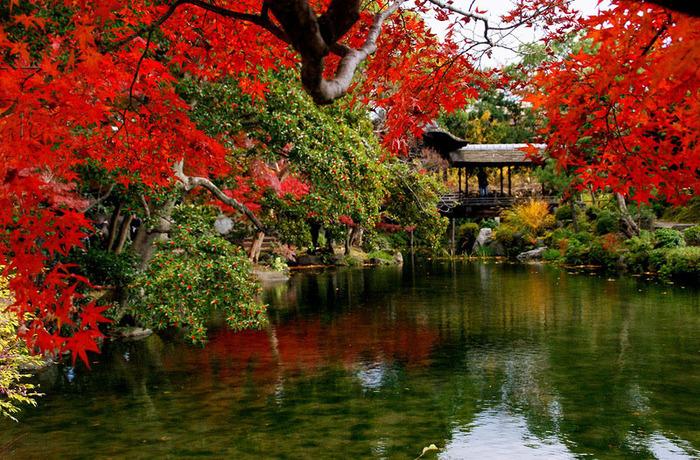 красивые фото осени киото япония 16 (700x460, 239Kb)