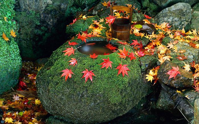 красивые фото осени киото япония 18 (700x437, 229Kb)