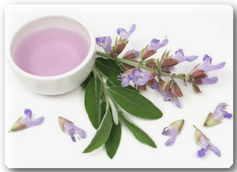 70214004_sage_essential_oil_dreamstime (486x354, 43Kb)
