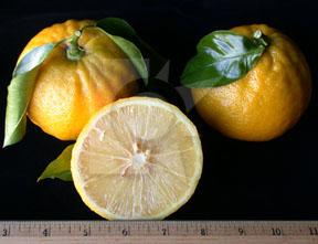Апельсин почему так назвали