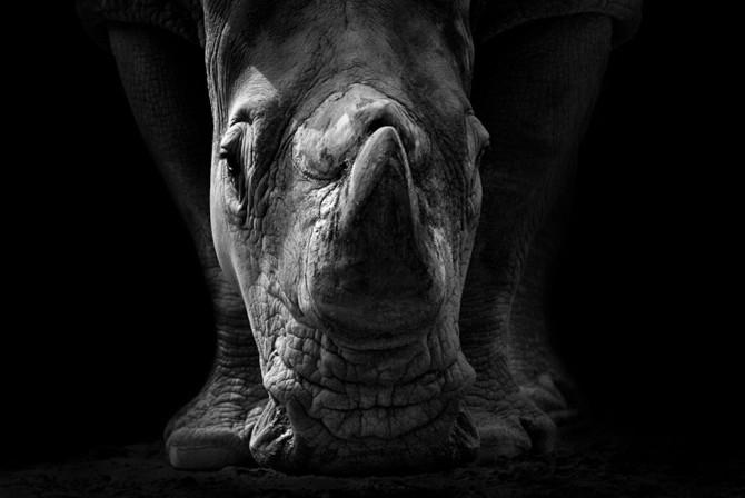 черно белые фото животных Wolf Ademeit 5 (670x448, 49Kb)