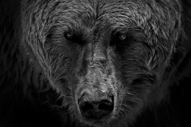 черно белые фото животных Wolf Ademeit 11 (670x446, 80Kb)