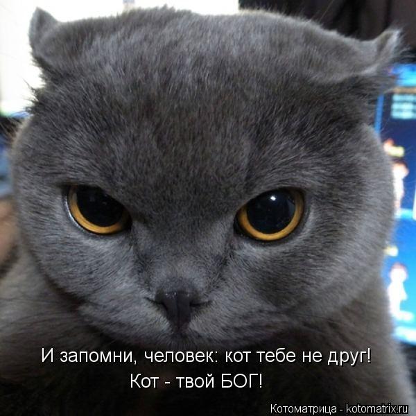 kotomatritsa_0i (600x600, 54Kb)
