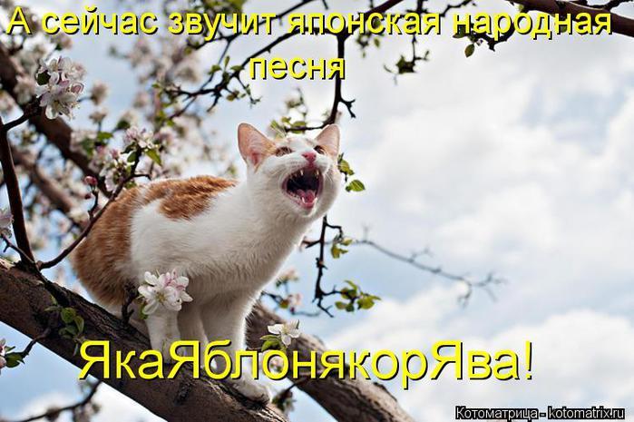 kotomatritsa_d7 (700x465, 61Kb)