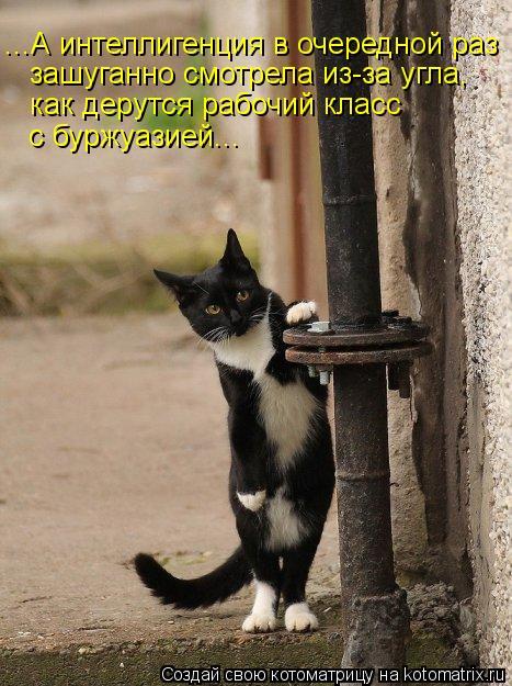 kotomatritsa_DC (467x625, 71Kb)