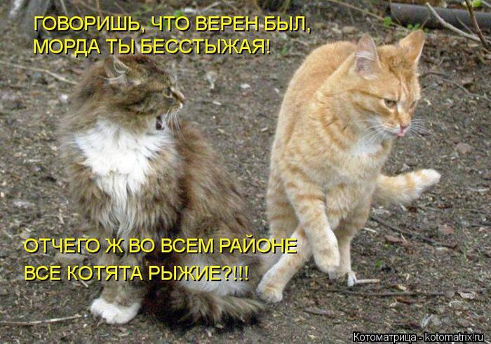 kotomatritsa_Fa (700x490, 80Kb)