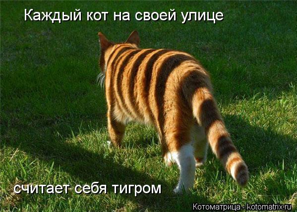kotomatritsa_kE (599x428, 63Kb)