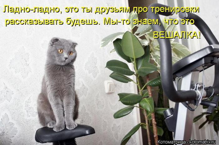 kotomatritsa_m2 (700x465, 58Kb)