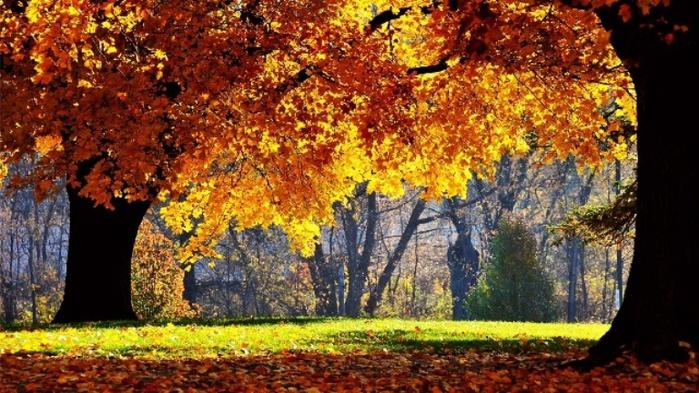 ws_Autumn_1280x720 (700x393, 177Kb)