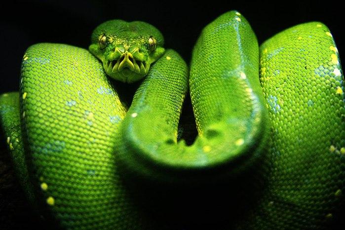 Самые красивые змеи планеты