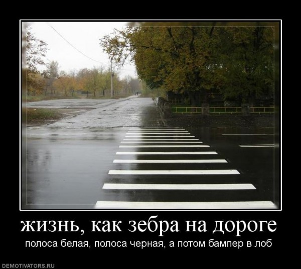 720204_zhizn-kak-zebra-na-doroge-600x535 (600x535, 70Kb)
