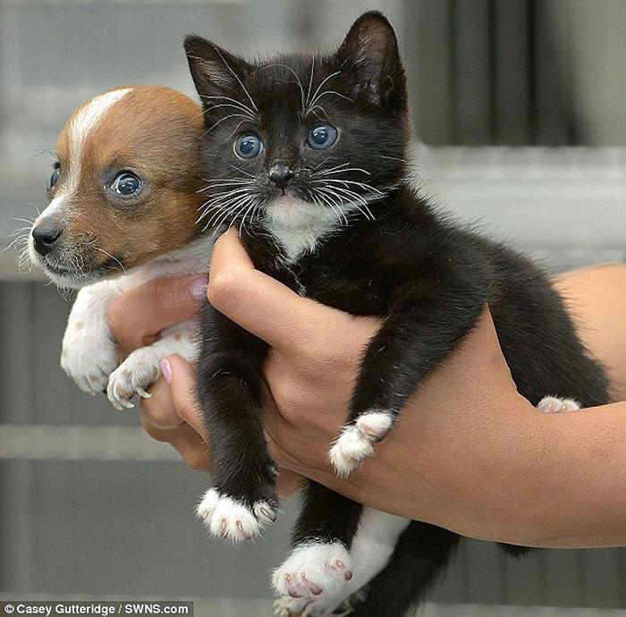 смешные фото щенков и котят 1 (700x690, 198Kb)
