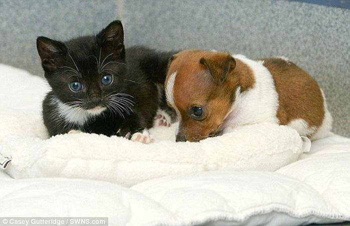 смешные фото щенков и котят 3 (700x452, 113Kb)